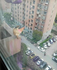 不勇敢一下,怎么知道自己是鸡还是鹰