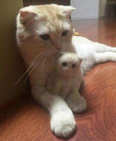 主人用猫掉下来的毛,做了一个小小猫,好厉害,真是一毛一样,哈哈哈你是谁啊?