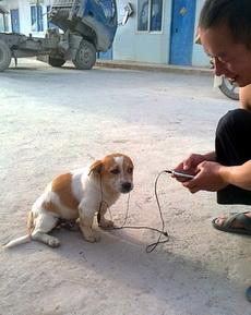 狗狗,周杰伦的歌曲,你听的懂吗