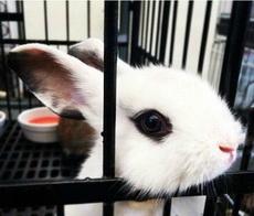 這只兔子顏值簡直了!