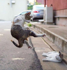 这猫的功夫帅到爆
