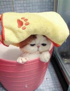 喵星人泡澡什么的最有爱了