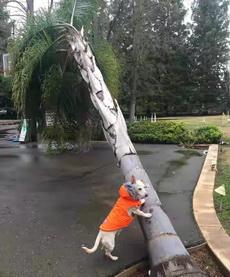 老实交代,这树是不是你推倒的?