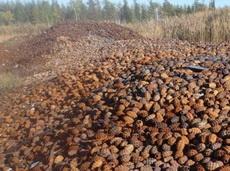 俄国的林业污染