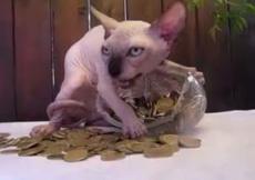 喵:这金币都是我的,谁也别想拿!