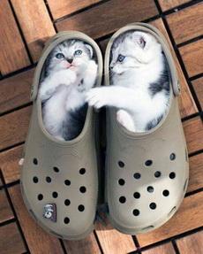 咦,我那两只猫哪儿去了啊?