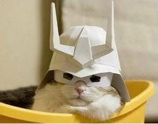 喵之头盔,防御力加100!