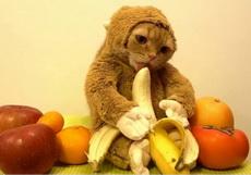 这是猴子还是猫啊?