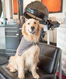 理发师,请帮我剪个最潮的发型!