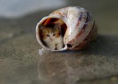 蝸居的小喵
