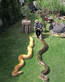 她养的两条蛇