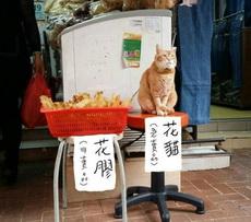 老板不怕偷吃啊?