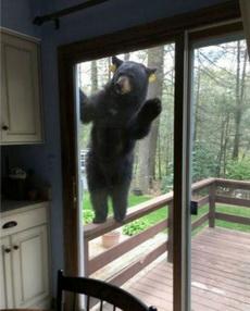 邻居,惊喜不惊喜?