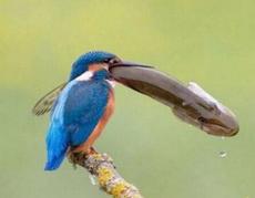这鸟胃口真大!!