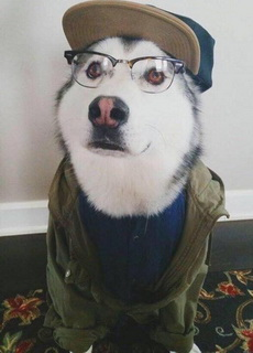 怎样才叫人模狗样呢?!