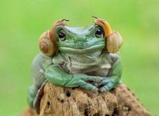 这款耳机绝对限量版