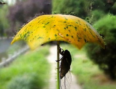 量身定做的雨伞
