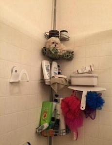 我们家的浴花长得有点像小狗没错啦,但是挤一挤,泡泡超多哦!