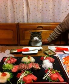 今晚怎么又吃这些啊喵