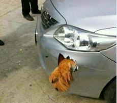 车不如鸡!