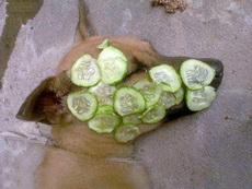 美颜黄瓜,被动物界广泛使用,黄瓜这是要涨价啊