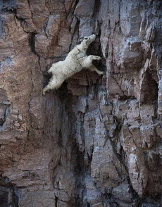 山不在高,有羊则灵