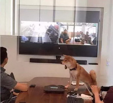 宠物食品企业唯一说真话的员工情绪有点激动