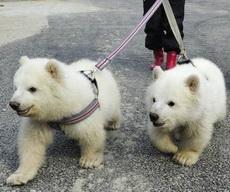 带两个熊孩子去散步