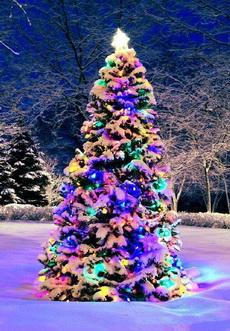 别人家的圣诞树