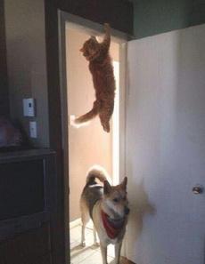 那只喵婊砸去哪了,我知道它来过这里!!!