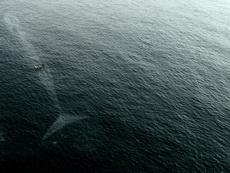 小船与蓝鲸
