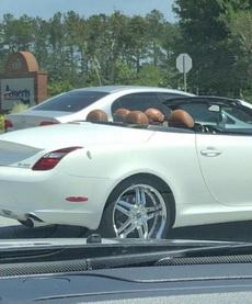 喂110吗?我看到4个卤蛋在开车