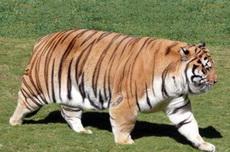 胖虎,你麻麻叫你回家吃饭了