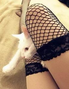 猫咪想逃跑好嘛!!