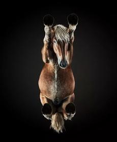 從下面看一匹馬
