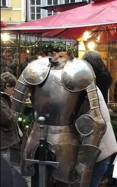 舔狗骑士团