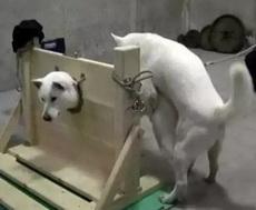 你这个狗子坏的很