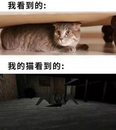 养猫的人太可怕了