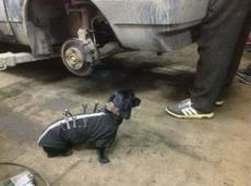 工具狗怎么样