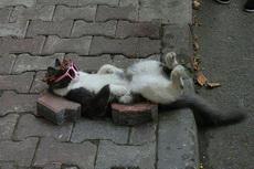 猫生苦短,舒服一会是一会