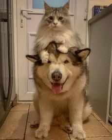 本猫的坐骑是不是傻乎乎的