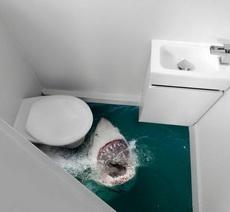 上个厕所都的担惊受怕的!