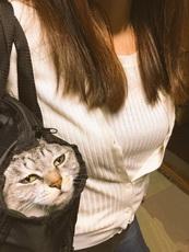 貓,你好像不太高興的樣子