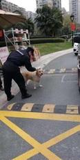 狗子都不用戴口罩的吗