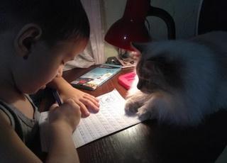 就这么静静的看着你写作业