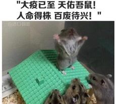 昨天小區進投放了鼠藥