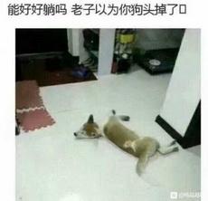 每次回家都以为自己的狗挂了