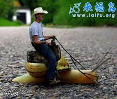 超级另类的动物交通工具2