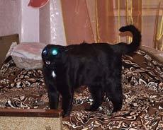 这只猫长得好有型啊