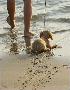 我不要游泳